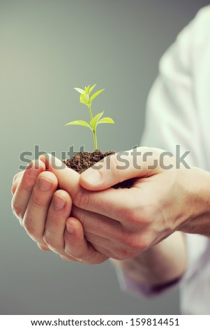 Cropped shot of man's hands holding new growth - stock photo