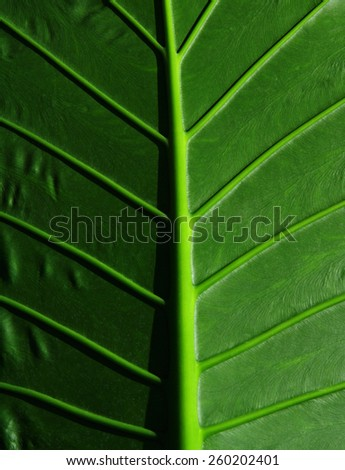 cropped tropical leaf - stock photo
