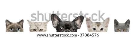 Cropped view of dog head and cat heads in front of white background, studio shot - stock photo