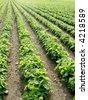 crops - stock photo