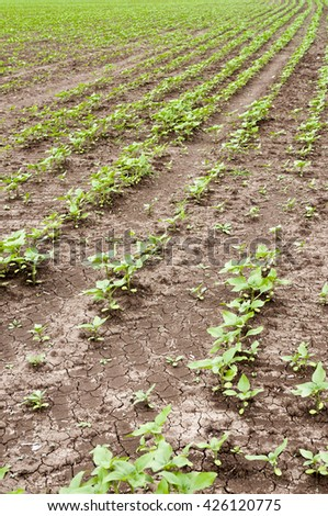 crops, field - stock photo