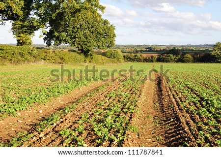 Crops Growing on Farmland in Rural England - stock photo
