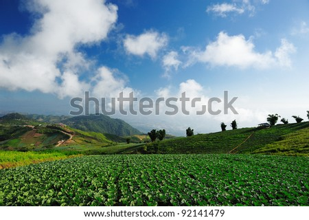 crops in the field ready for harvest in rural China - stock photo