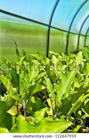 crops in the plastic greenhouse - stock photo