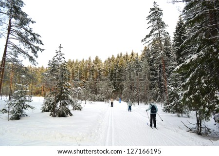 Cross country skiing in wood, Leningrad Region, Russia