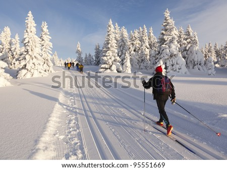Cross country skiing on a  sunny winter morning