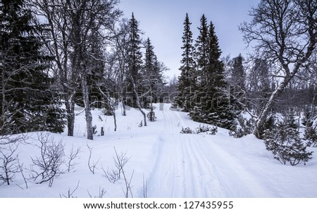 Cross Country Skiing Trail through Winter Woodland, Storvallen, Sweden