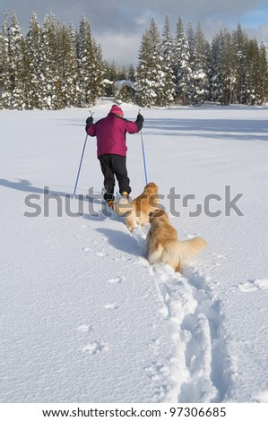 Cross country skiing with dogs on lake in Donner summit area of California - stock photo