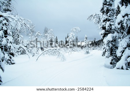 Cross country trail in a Swedish skiing resort Åre, site of the Alpine Ski Championship 2007. - stock photo
