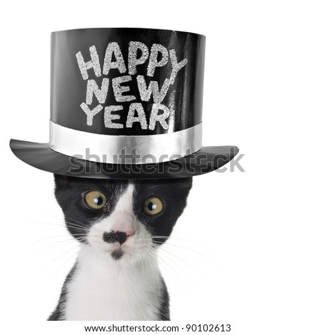 Cross eyed cat wearing a happy new year hat. - stock photo
