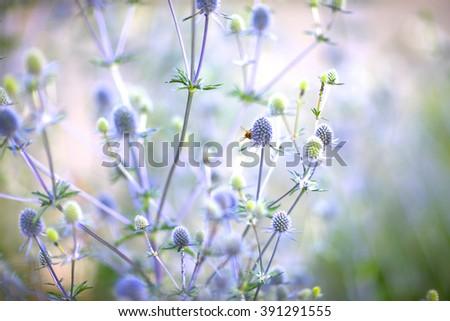 Cross-pollinated flowers - stock photo