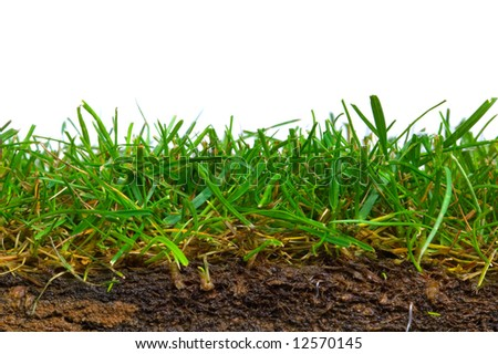 Cross section from a piece of turf shot against a white background. - stock photo