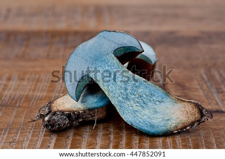 Cross-section of boletus luridiformis, formerly known as Boletus erythropus, commonly known as the dotted stem bolete  - stock photo