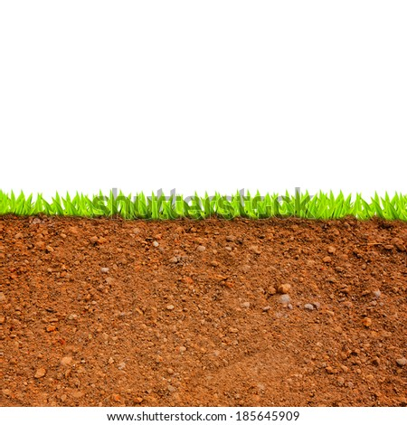 cross section of grass and soil against white background. - stock photo