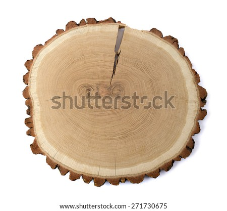 Cross section of  oak on white background - stock photo