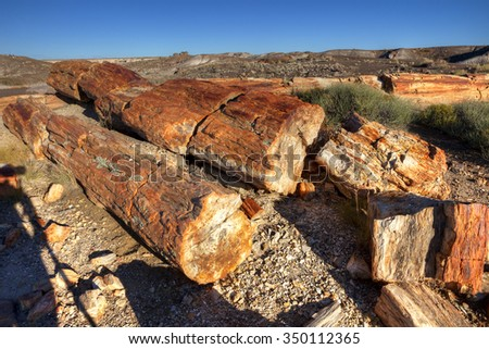 Cross section of the colorful remains of fossilized trees dating from the Late Triassic era of 225 million years ago,Petrified Forest National Park, Arizona. - stock photo