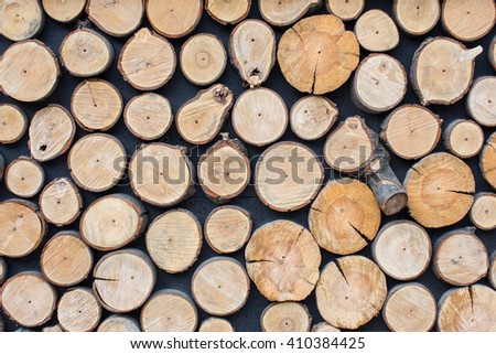 Cross section of the tree pine - stock photo