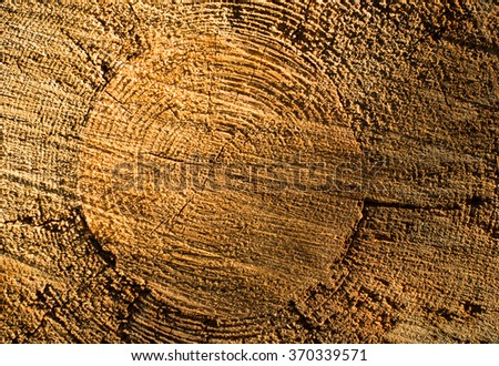 Cross section of the tree trunk. Wooden texture. - stock photo