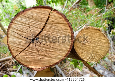 Cross section of tree showing growth rings - stock photo