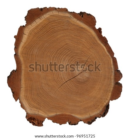 Cross section of tree trunk  isolated on white - stock photo