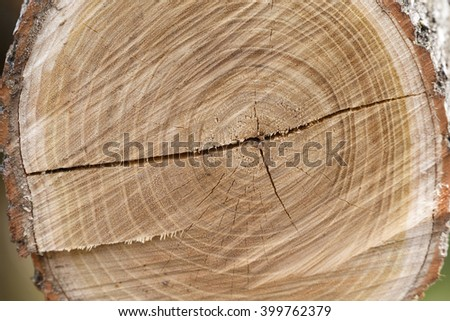 Cross section of tree trunk showing growth rings. - stock photo