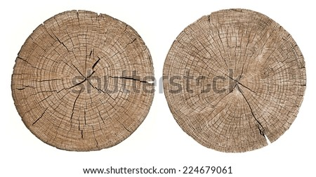 Cross section of tree trunk showing growth rings on white background, set - stock photo