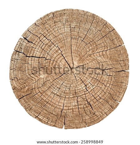 Cross section of tree trunk showing growth rings on white background. wood texture - stock photo