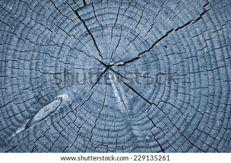 Cross section of tree trunk showing growth rings,texture background - stock photo