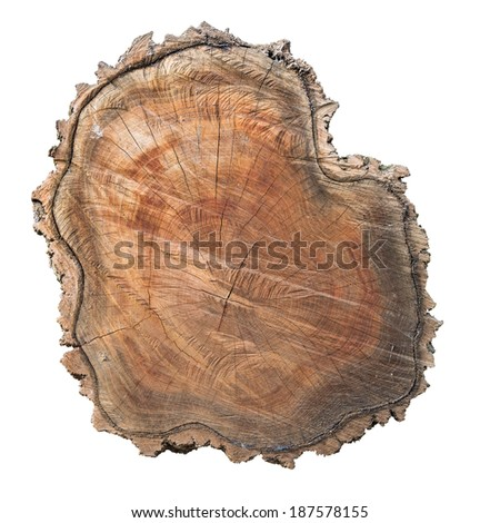 Cross section of tree trunk with bark isolated on white background - stock photo