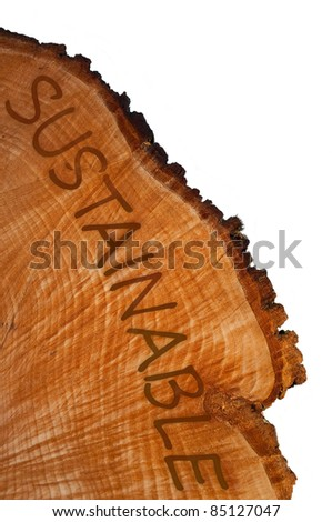 Cross section of tree trunk with word 'sustainable' . White background. - stock photo