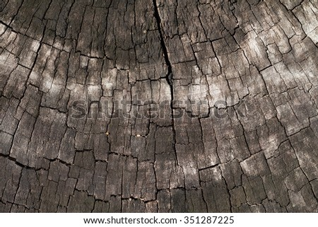 Cross section of wood bark texture , wood rings Grunge - stock photo