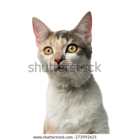 Crossbreed cat in front of a white background - stock photo