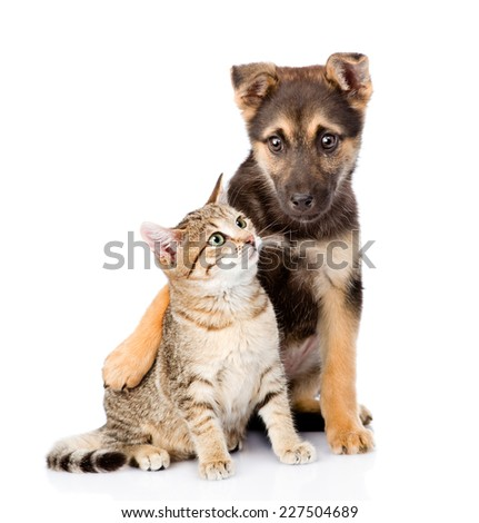 crossbreed dog embracing small tabby cat. isolated on white background - stock photo
