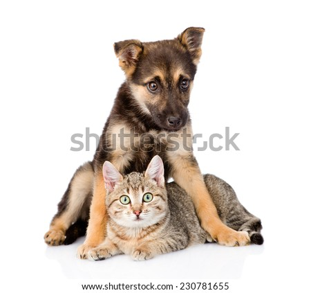 crossbreed dog embracing tabby cat. isolated on white background - stock photo