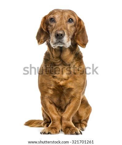 Crossbreed dog in front of white background - stock photo
