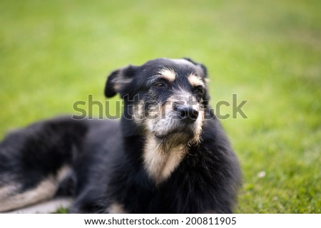 Crossbreed Dog lying on the Grass