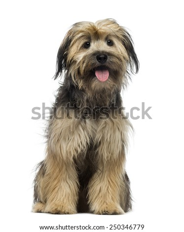 Crossbreed dog (7 months old) - stock photo