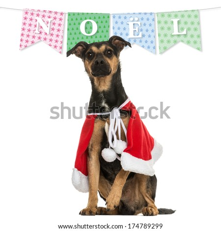 Crossbreed dog wearing a christmas cape, sitting, isolated on white with a christmas banner