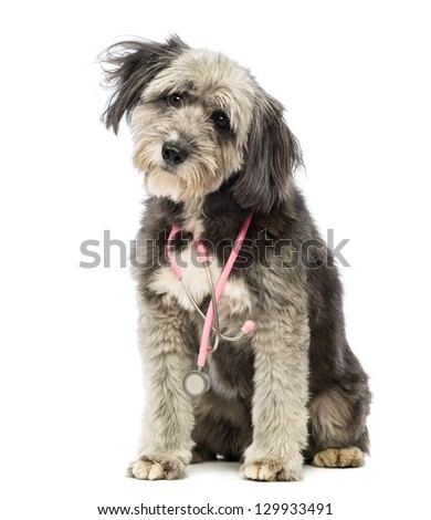 Crossbreed, 4 years old, sitting and wearing a pink stethoscope around the neck in front of white background