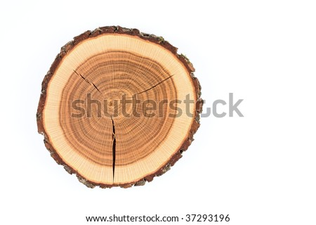 Crossection of an oak tree trunk - stock photo