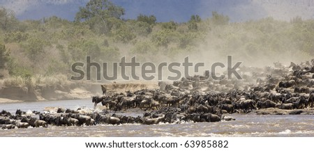 Crossing the Mara river during the great migration in Kenya - stock photo