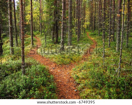 Crossroads in the Karelian forest - stock photo