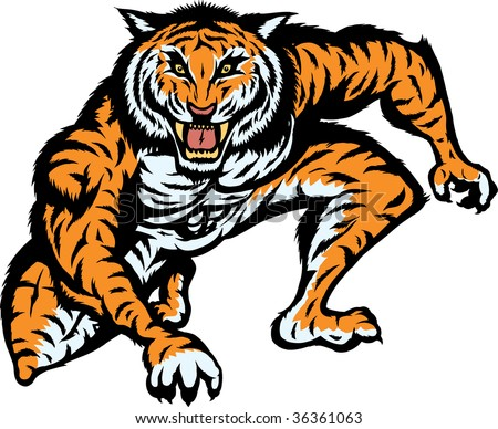 Crouched tiger ready to attack.  Can be used for mascott or logo. - stock photo