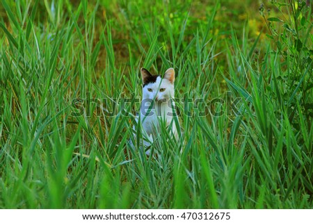 crouching white cat with a black ear sits in the tall grass and watching his prey