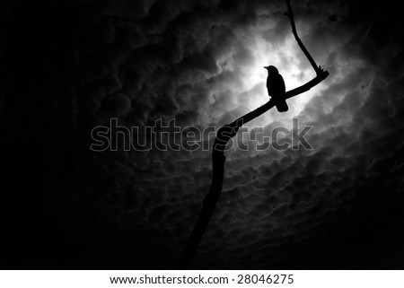 Crow on a barren branch in Death Valley, California - stock photo