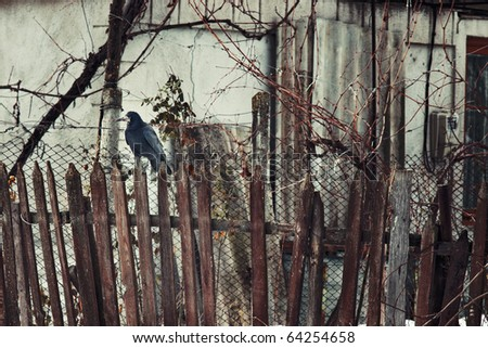 Crow on old wooden fence against dark grungy background - stock photo