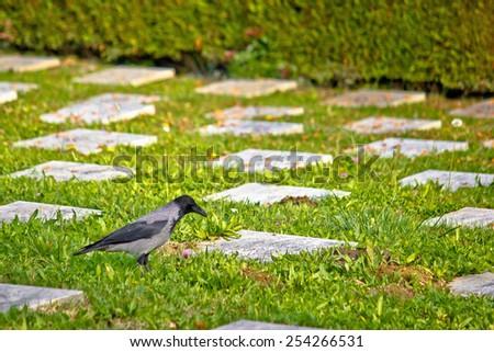 Crow on unmarked grave mystic scene - stock photo