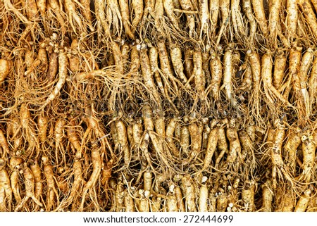 crowd of real ginseng from the North of Korean Republic. - stock photo