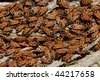 Crowd of red insects (lygaeus equestris) - stock photo