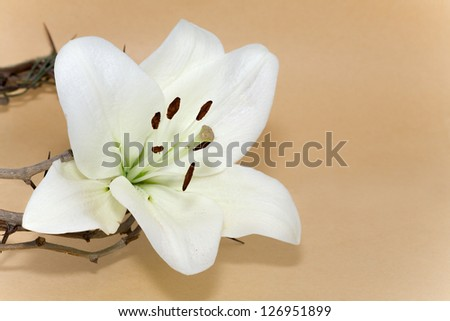 Crown of Thorns and Easter white Lily on  Beige background - stock photo